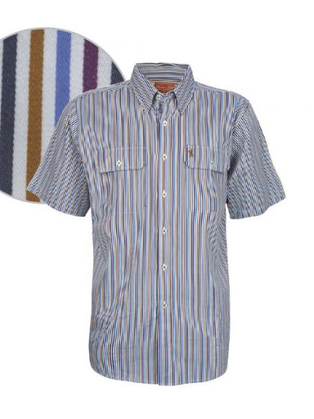 Men's Thomas Cook Button Down Short Sleeve Stripe Shirt PARAFIELD